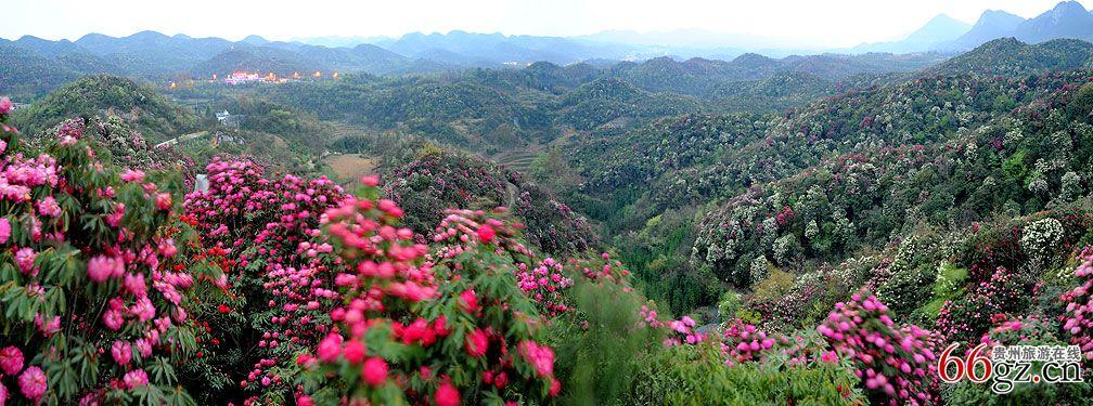 百里杜鹃(省级风景名胜区,自然保护区,国家级森林公园)