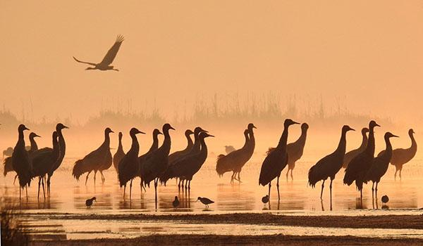 迁移迁移过冬的动物图片