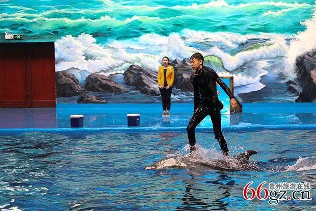 多彩贵州城极地海洋世界五一活动出炉 等你来哟!