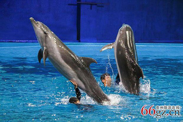 """贵阳市多彩贵州城极地海洋世界推出主题为""""欢乐无限."""