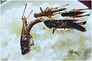金秋油炸蚂蚱香