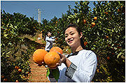 榕江脐橙,来自大山里的好果子!