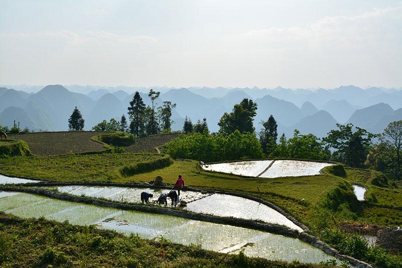 面积约达2000亩,附近的村庄撒落在峰林之中,构成了梯田,峰林,村庄的