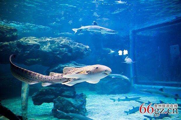 贵州首家大型海洋馆 贵州龙川极地海洋世界