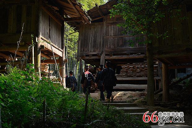 褐色的木板房在幽绿的丛林护卫下像一座幽