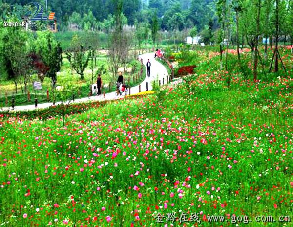 花溪十里河滩湿地公园花田盛开-贵州旅游在线