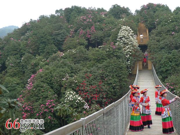 百里杜鹃景区,位于贵州毕节试验区中部