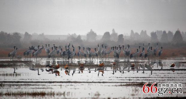 生态草海百鸟乐园-贵州旅游在线